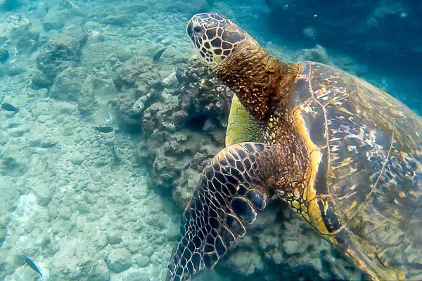 Molokini crater and the turtle town